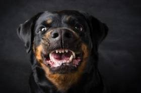 What Should I Do After a Dog Bite Injury in Waukesha County?